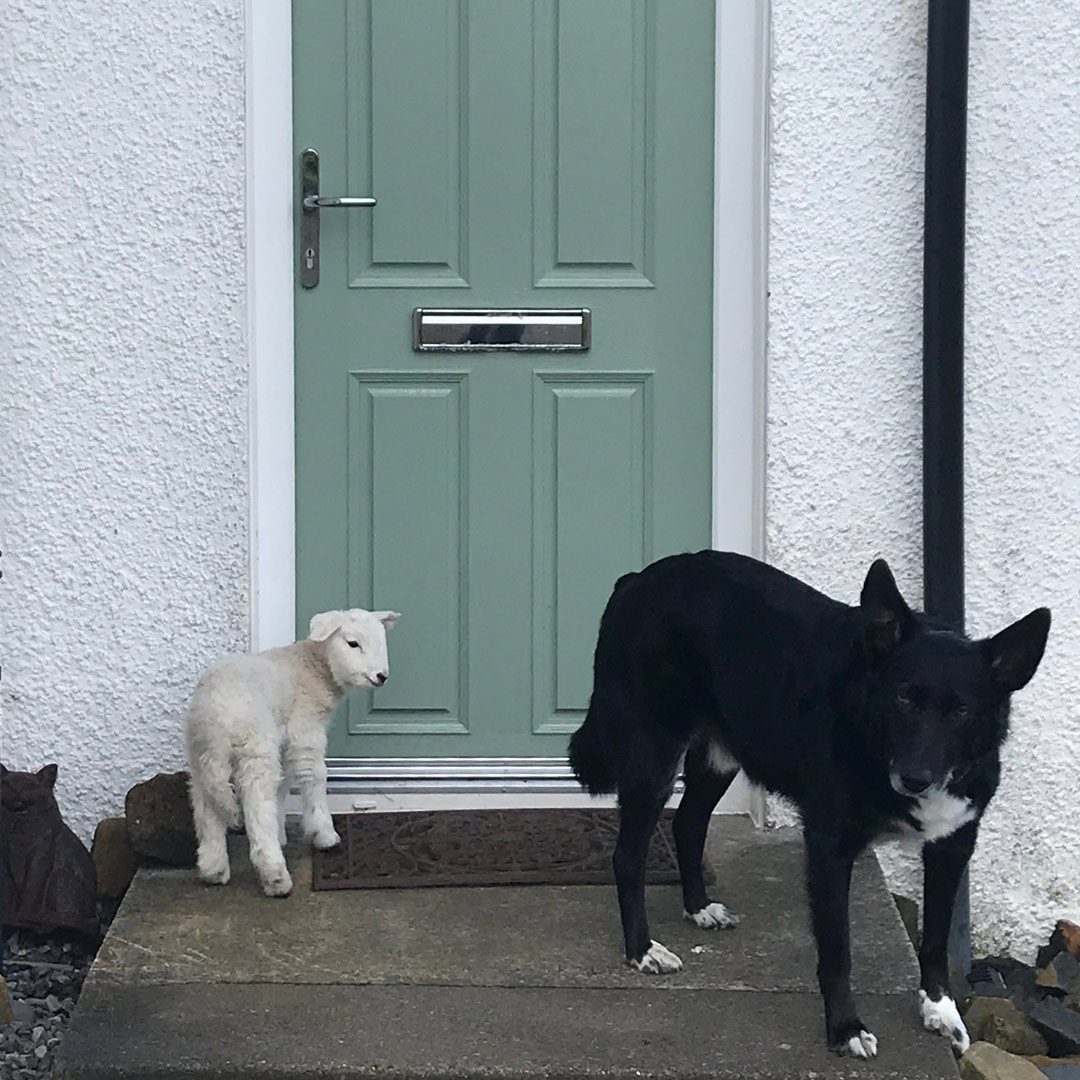 lamb and dog by a door