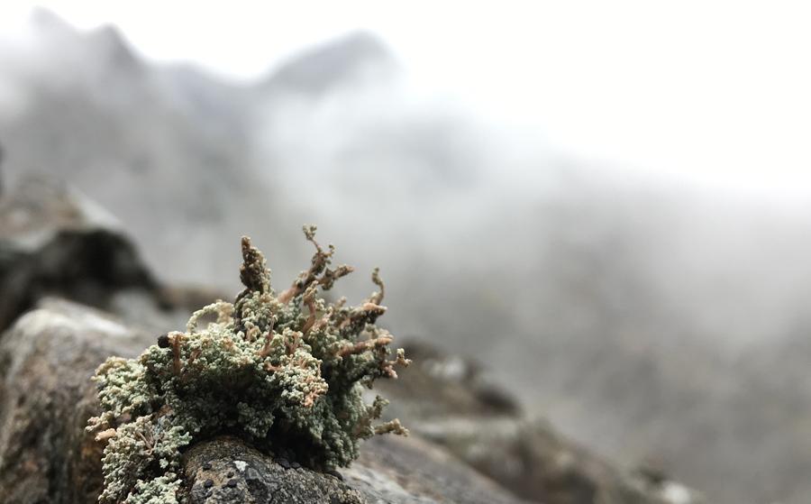 Lichen in Cuillin Hills, Isle of Skye