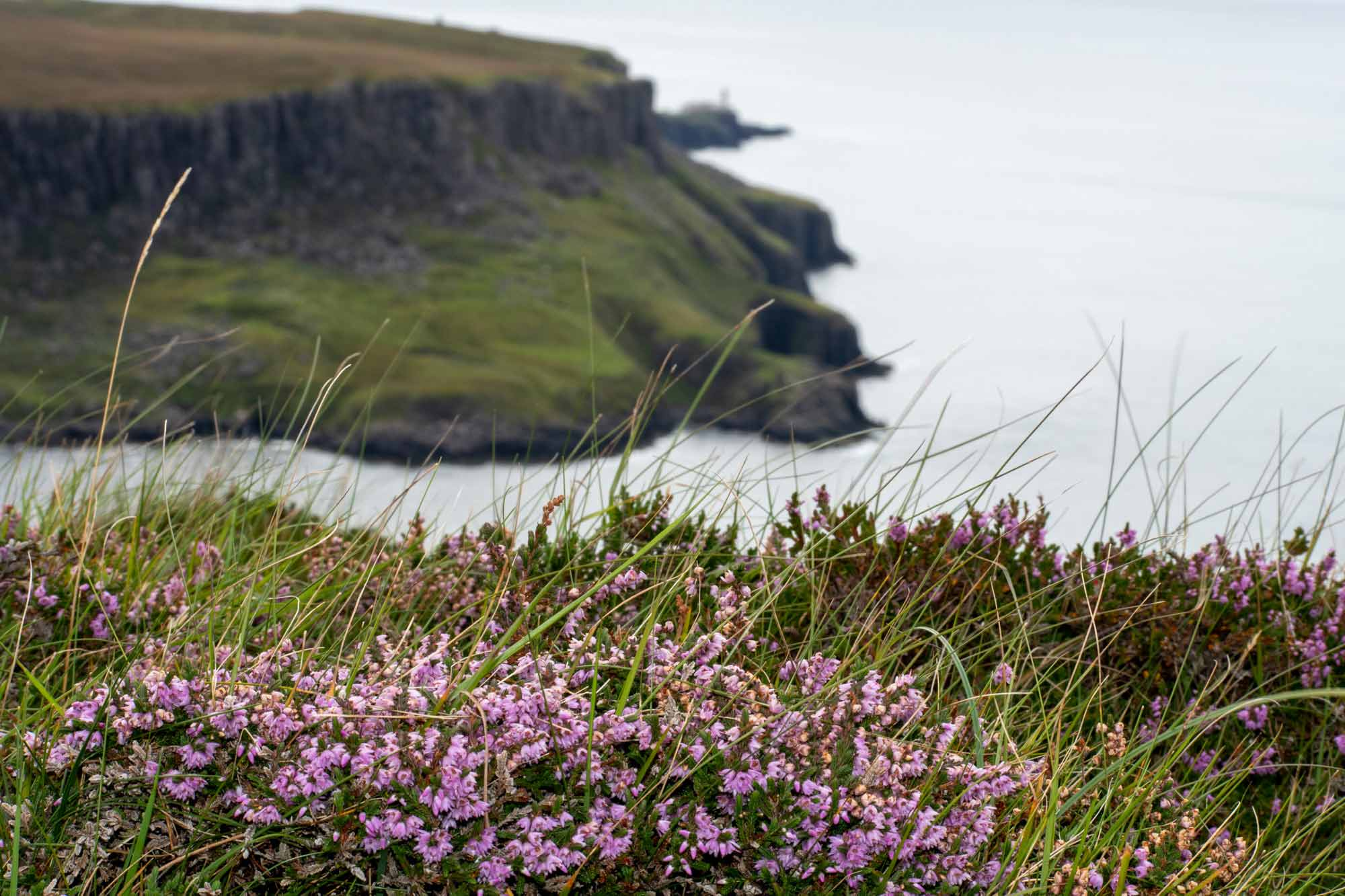 heather at Neist