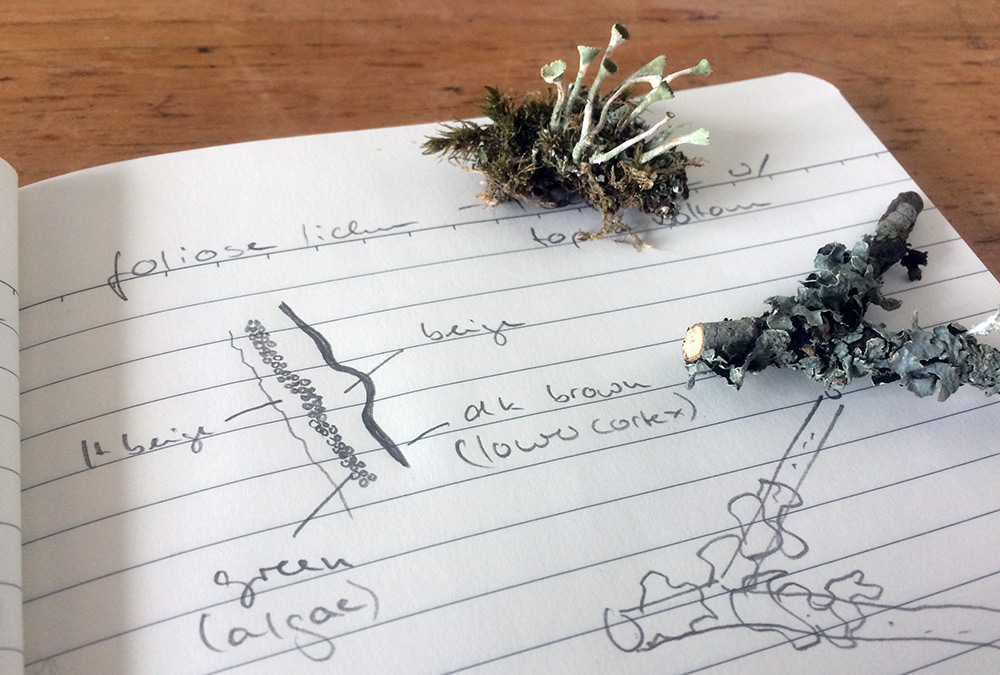 notebook with lichen drawings
