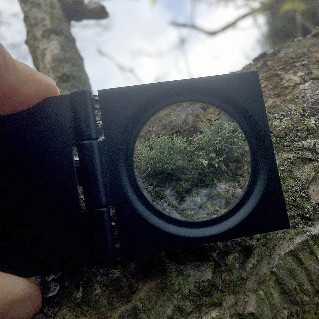 magnifying glass and lichen