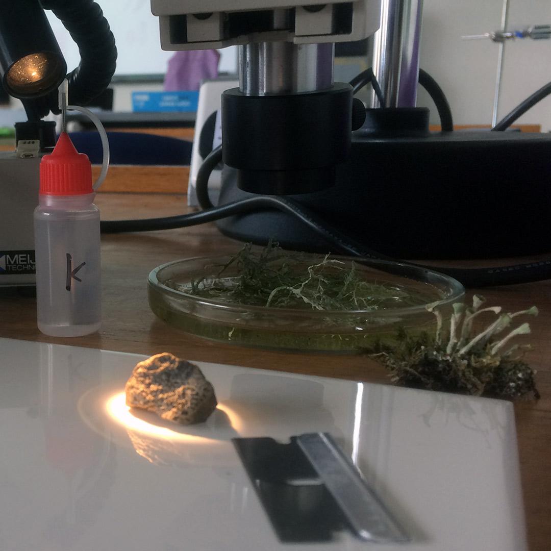 lichen identification classroom