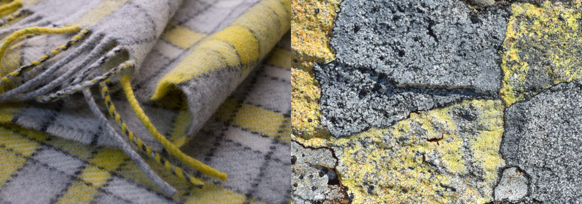 map-lichen-scarves
