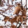 Skye Weavers Log Cabin Throw, Winter Beech Inspiration