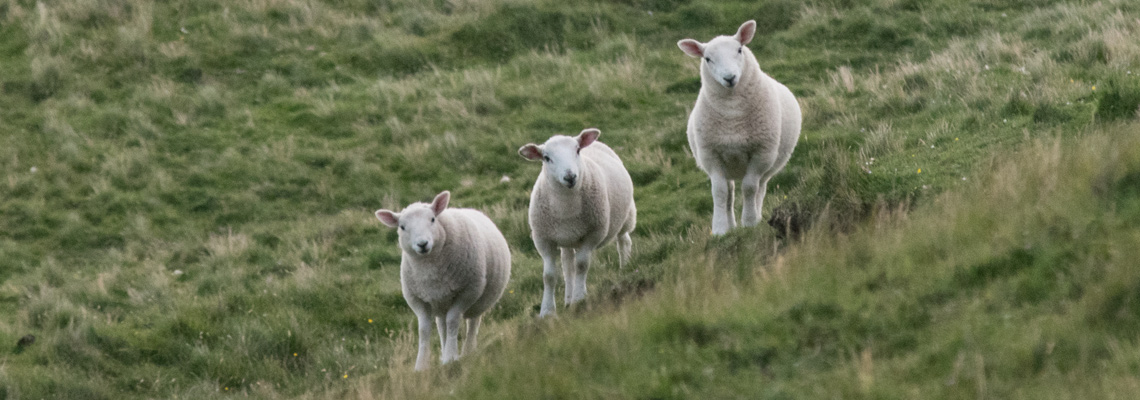 three good reasons we like wool
