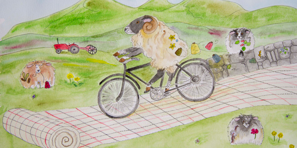 cycling sheep